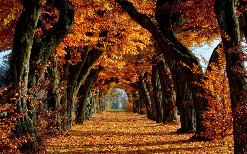 autumn-5.jpg